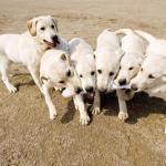 Άγνωστος φαρμακώνει σκυλιά και γάτες στη Γαλάτιστα  - 151